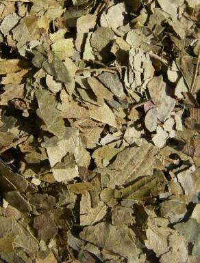 Folhas de Caril - Folhas