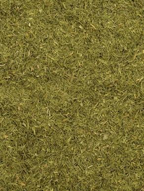 Endro - Aneto - Folhas