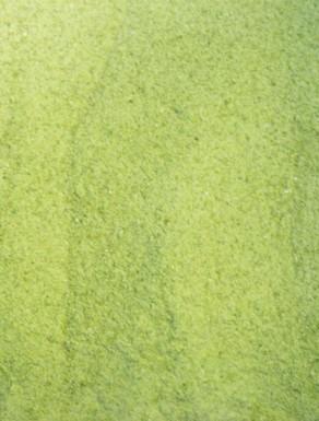 Proteina de Ervilha Biológica - Pó
