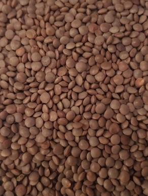 Lentilha Castanha Seca - Bagas