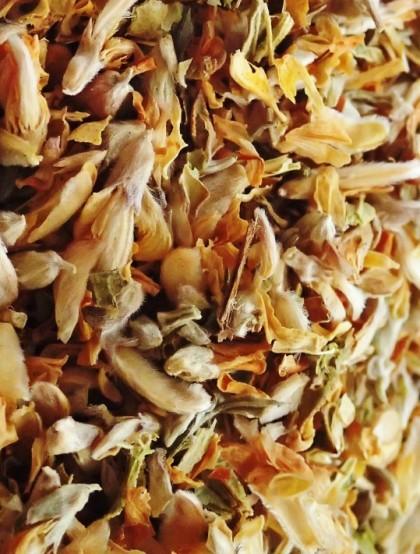 Carqueja - Flor