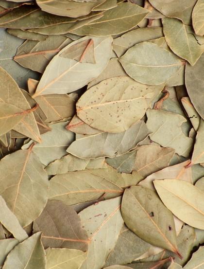 Louro 1ª Escolha - Folhas