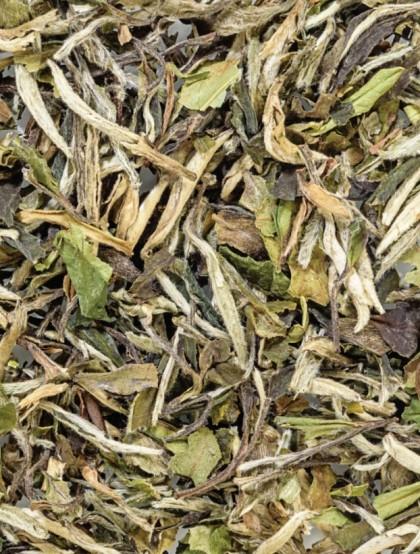 Chá Branco Pai Mu Tan  - Folhas