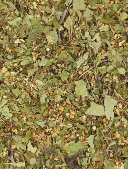 Crataegus / Espinheiro Alvar - Planta