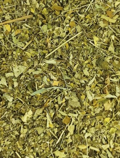 Moringa Oleifera - Folhas